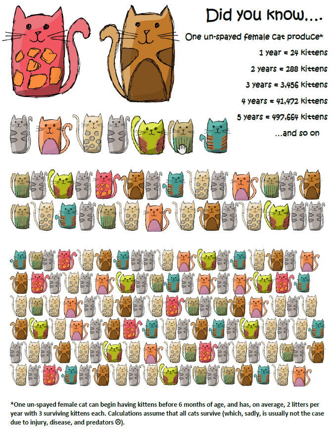 spay neuter infographic